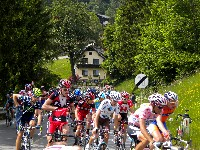 Das Hauptfeld mit Alberto Contador im rosa Trikot oberhalb von Kötschach, vorne bückt sich Radlwolf um einen wegeworfenen Verpflegungsbeutel