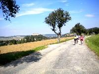Auf wunderschönen Straßen radeln die Teilnehmer durch den herrlichen Wienerwald