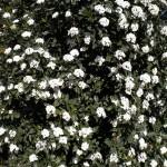 wo man hinschaut Blüten