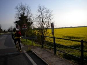 An den Rapsfeldern vorbei nach Grado