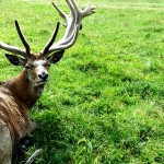 "auch der Hirsch im Wildpark Rosegg war sehr interessiert an unserer ""R1 Tour"""
