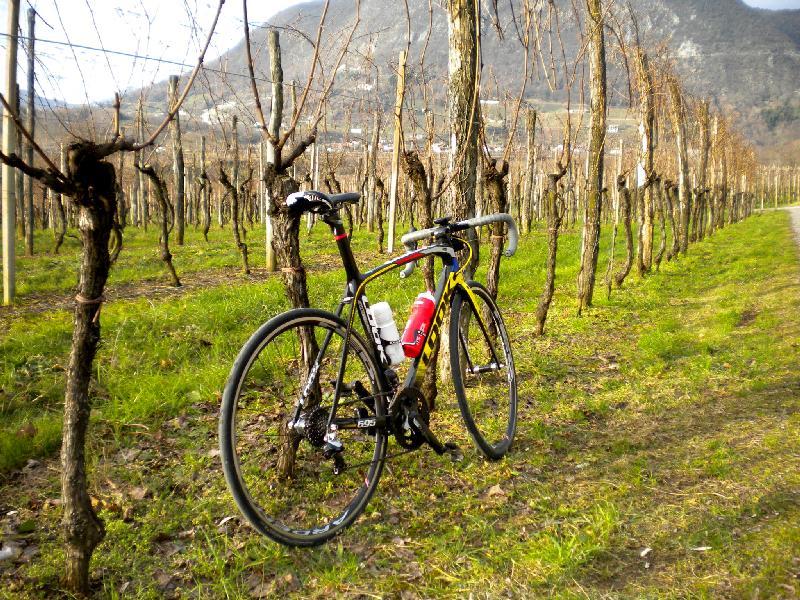weiter geht es durch die Weingärten bei Nimis