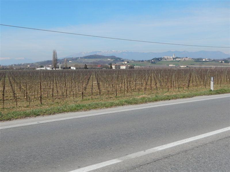 wunderschöne Weingegend entlang der SS13 zwischen Conegliano und Pordenone