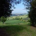 Blick vom Olivenhain in Rtg. Rimini