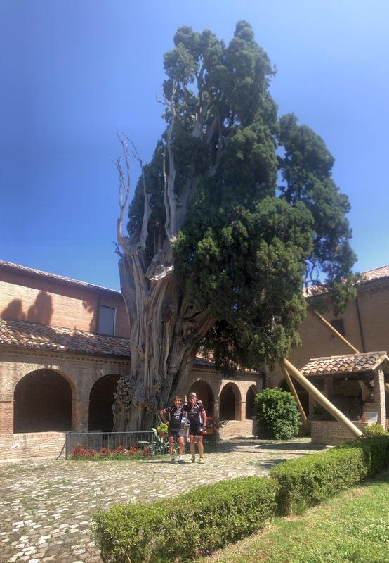 Die Cipressa di Francesco wurde 1213 von Franz von Assisi in der Nähe von Verucchio gepflanzt Foto: © Nicole Böhlen